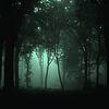 El guardián del bosque - relato